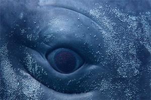 digital whales balene a milano