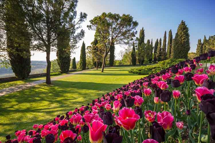 Parco Sigurtà: fioriture per una giornata magica